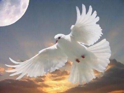 Puisi Cinta on Terbangkan Anganku Meraih Cinta Suci